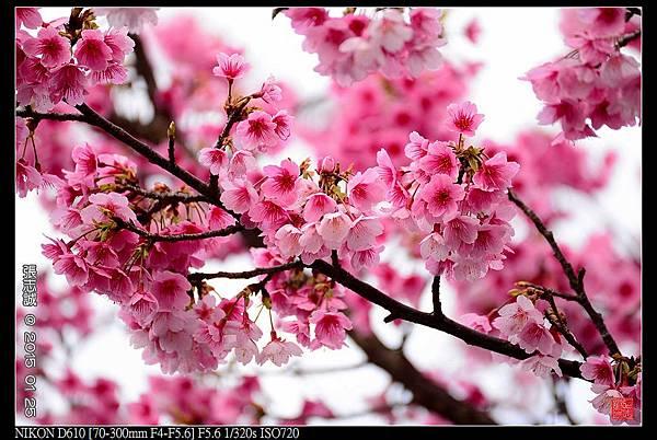 nEO_IMG_150125--PingJing St. D610 005-1000.jpg