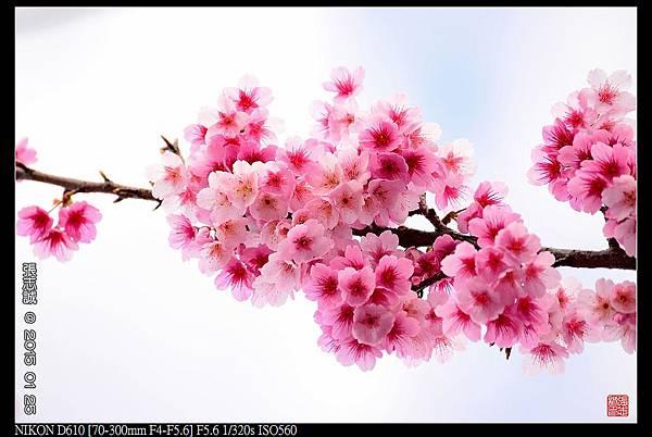 nEO_IMG_150125--PingJing St. D610 012-1000.jpg