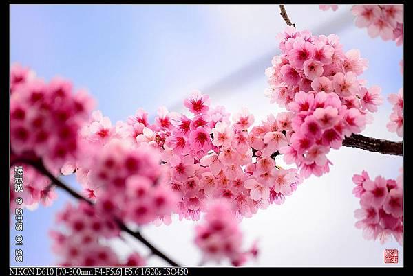 nEO_IMG_150125--PingJing St. D610 015-1000.jpg