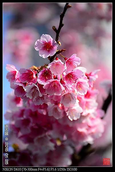 nEO_IMG_150125--PingJing St. D610 045-1000.jpg