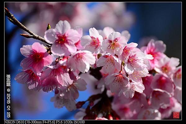 nEO_IMG_150125--PingJing St. D610 048-1000.jpg