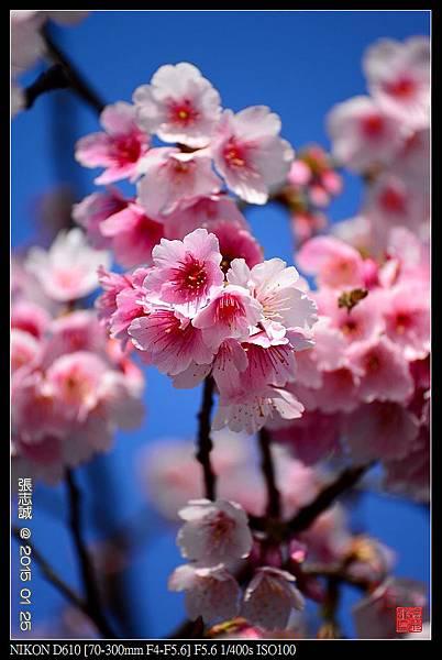 nEO_IMG_150125--PingJing St. D610 085-1000.jpg
