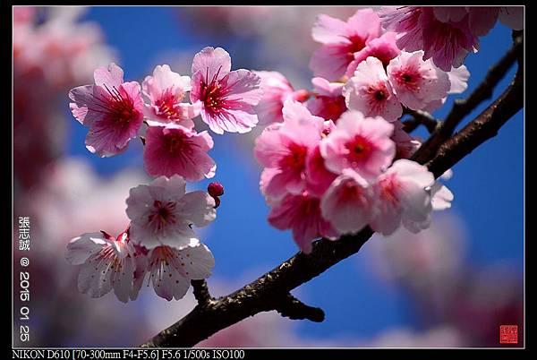 nEO_IMG_150125--PingJing St. D610 097-1000.jpg