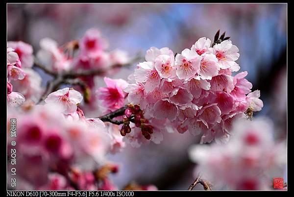 nEO_IMG_150125--PingJing St. D610 136-1000.jpg