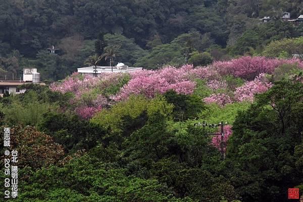 150301--Sakura 009-1000.JPG
