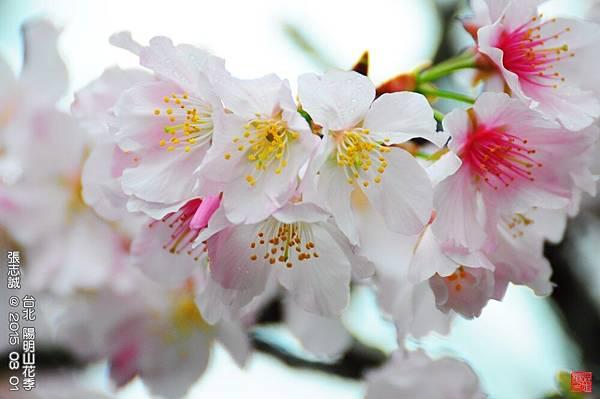 150301--Sakura 093-1000.JPG