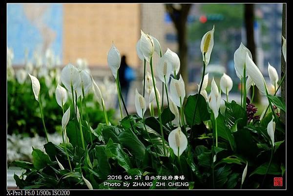 nEO_IMG_160421--Street Snap shots 037-1000.jpg