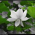 nEO_IMG_160611--Zhide Yuan 001-1000.jpg