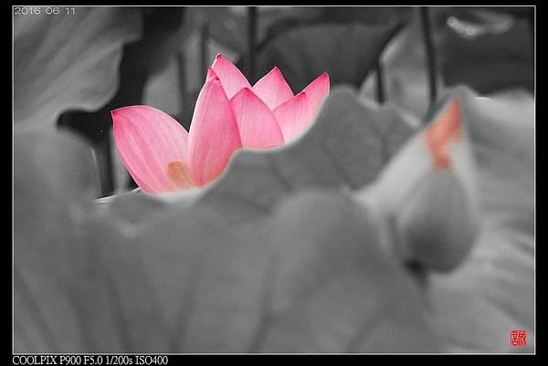 nEO_IMG_160611--Zhide Yuan 004-1000.jpg