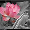 nEO_IMG_160611--Zhide Yuan 008-1000.jpg