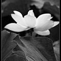 nEO_IMG_160611--Zhide Yuan 003-1000.jpg