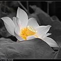 nEO_IMG_160611--Zhide Yuan 024-1000.jpg