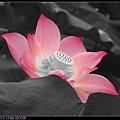 nEO_IMG_160611--Zhide Yuan 025-1000.jpg