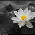 nEO_IMG_160611--Zhide Yuan 021-1000.jpg