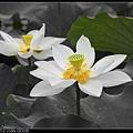 nEO_IMG_160611--Zhide Yuan 023-1000.jpg