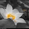 nEO_IMG_160611--Zhide Yuan 026-1000.jpg