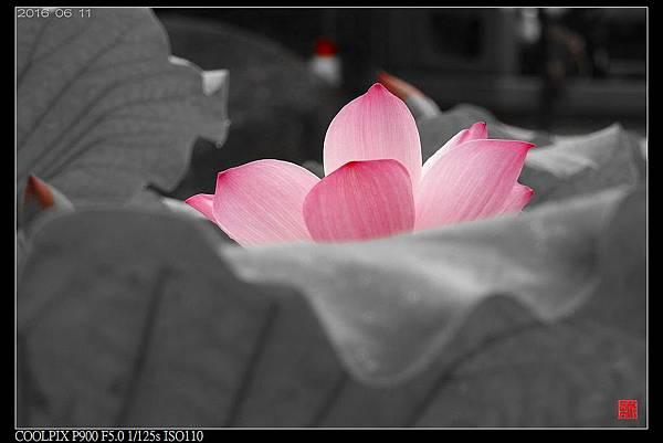 nEO_IMG_160611--Zhide Yuan 030-1000.jpg