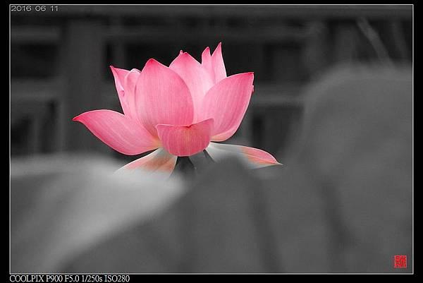 nEO_IMG_160611--Zhide Yuan 032-1000.jpg
