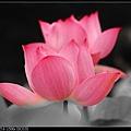 nEO_IMG_160611--Zhide Yuan 037-1000.jpg