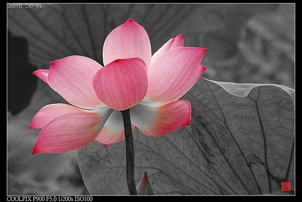 nEO_IMG_160611--Zhide Yuan 035-1000.jpg