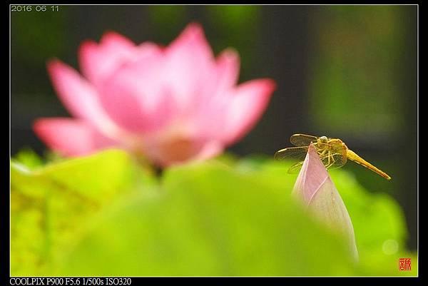 nEO_IMG_160611--Zhide Yuan 046-1000.jpg
