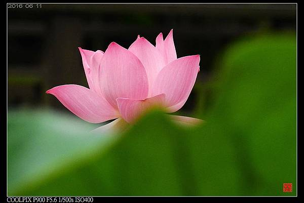 nEO_IMG_160611--Zhide Yuan 033-1000.jpg