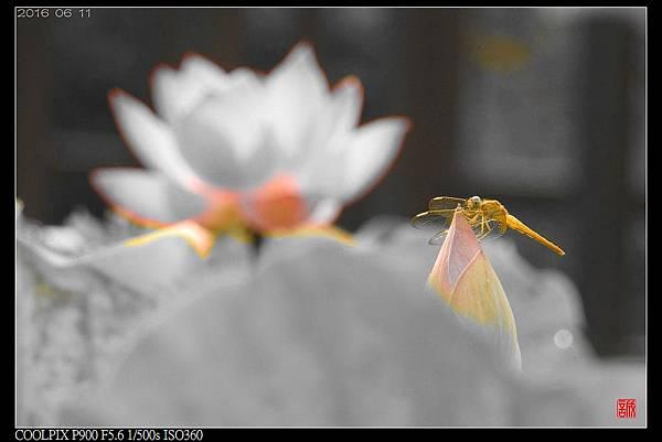 nEO_IMG_160611--Zhide Yuan 047-1000.jpg