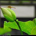 nEO_IMG_160611--Zhide Yuan 062-1000.jpg