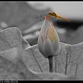 nEO_IMG_160611--Zhide Yuan 042-1000.jpg