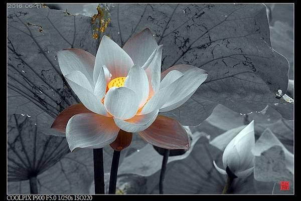 nEO_IMG_160611--Zhide Yuan 065-1000.jpg