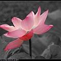 nEO_IMG_160611--Zhide Yuan 074-1000.jpg