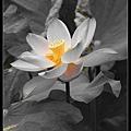 nEO_IMG_160611--Zhide Yuan 076-1000.jpg