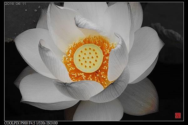 nEO_IMG_160611--Zhide Yuan 070-1000.jpg