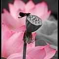 nEO_IMG_160611--Zhide Yuan 090-1000.jpg