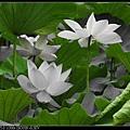 nEO_IMG_160611--Zhide Yuan 093-1000.jpg
