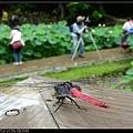 nEO_IMG_160611--Zhide Yuan 084-1000.jpg