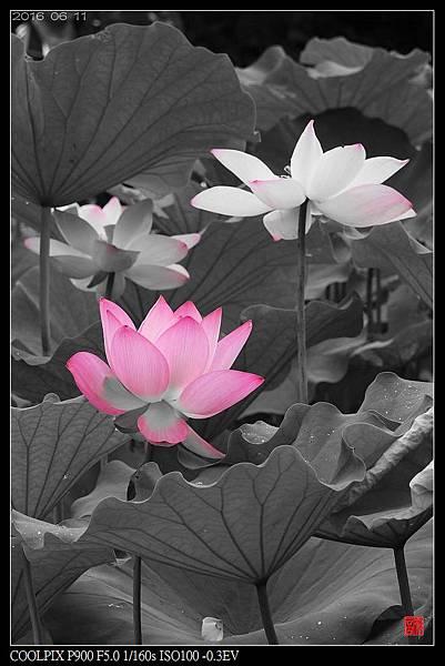 nEO_IMG_160611--Zhide Yuan 095-1000.jpg