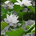 nEO_IMG_160611--Zhide Yuan 096-1000.jpg