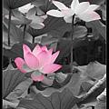 nEO_IMG_160611--Zhide Yuan 100-1000.jpg