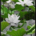 nEO_IMG_160611--Zhide Yuan 101-1000.jpg