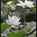 nEO_IMG_160611--Zhide Yuan 102-1000.jpg