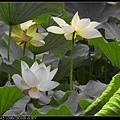 nEO_IMG_160611--Zhide Yuan 104-1000.jpg