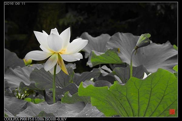 nEO_IMG_160611--Zhide Yuan 106-1000.jpg