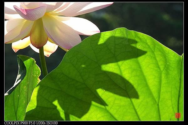 nEO_IMG_160703--Botanical Garden 004-1000.jpg