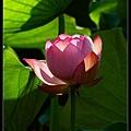 nEO_IMG_160703--Botanical Garden 011-1000.jpg
