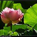 nEO_IMG_160703--Botanical Garden 016-1000.jpg