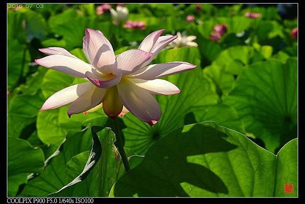 nEO_IMG_160703--Botanical Garden 002-1000.jpg