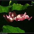 nEO_IMG_160703--Botanical Garden 017-1000.jpg