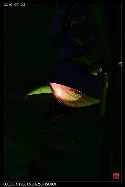 nEO_IMG_160703--Botanical Garden 018-1000.jpg
