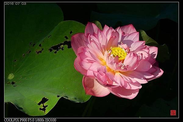 nEO_IMG_160703--Botanical Garden 021-1000.jpg